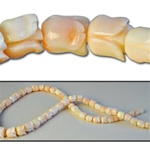Wholesale Coral Beads Genuine angel skin coral, carved tulip beads, 5mm-10mm, sold by the strand, (64 beads per strand).
